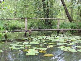 Brücke bei Schlepzig im Spreewald