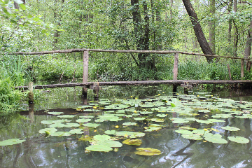 Naturfahrt im Spreewald
